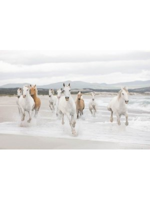 Wallpaper - White Horses - Size: 368 X 254 cm