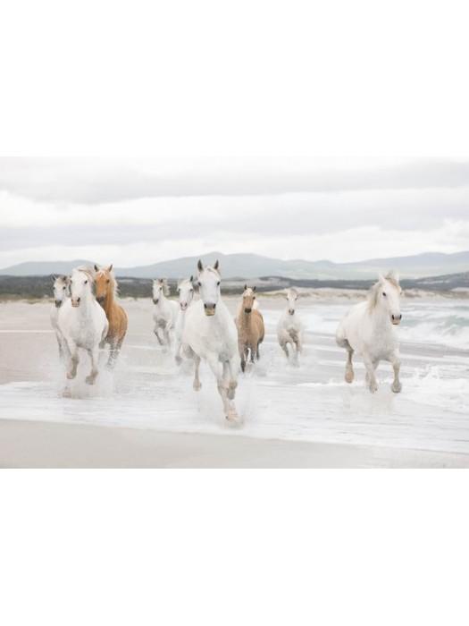 Wallpaper - White Horses - Size: 368 X 254 cm art:8-986