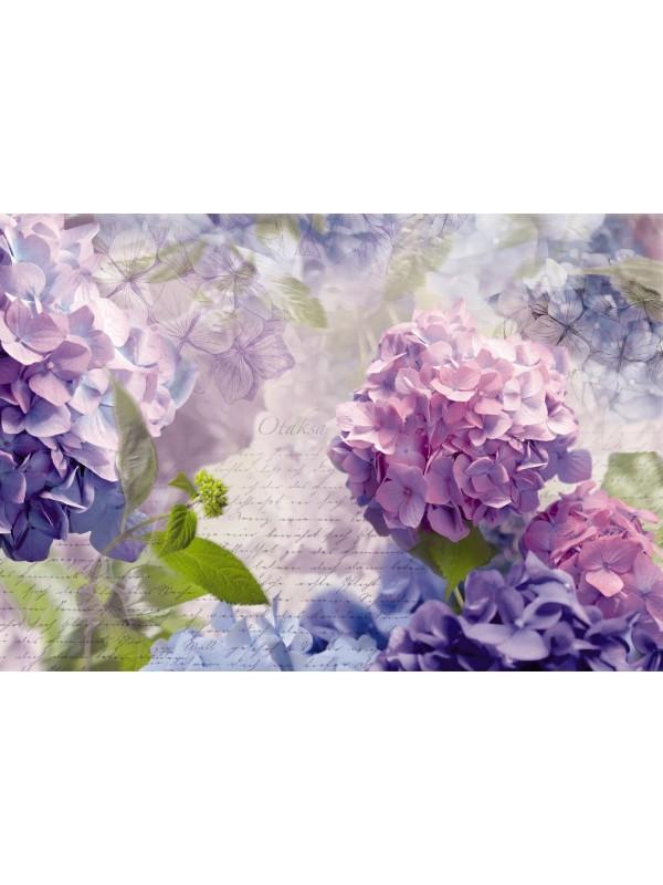 Wallpaper - Otaksa - Size: 368 X 254cm