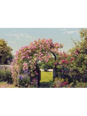 Rose Garden- Size: 368 X 254 cm