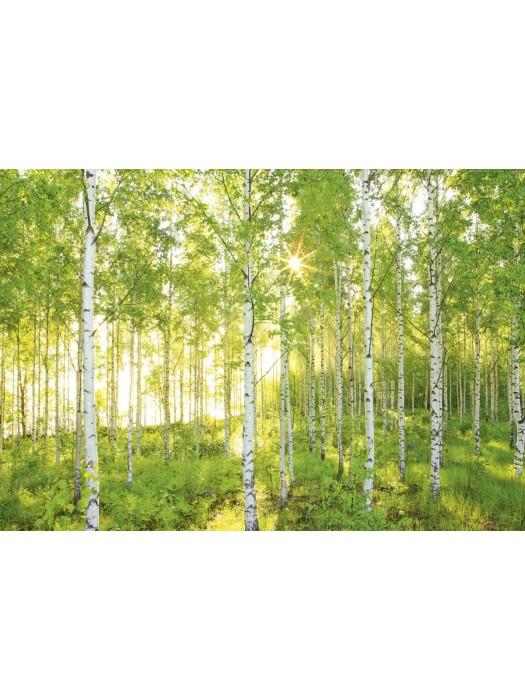 Wallpaper- Sunday - Size: 368 X 254 cm